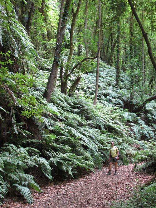 Wandern auf La Palma: Im Lorbeerwald bei Los Tilos