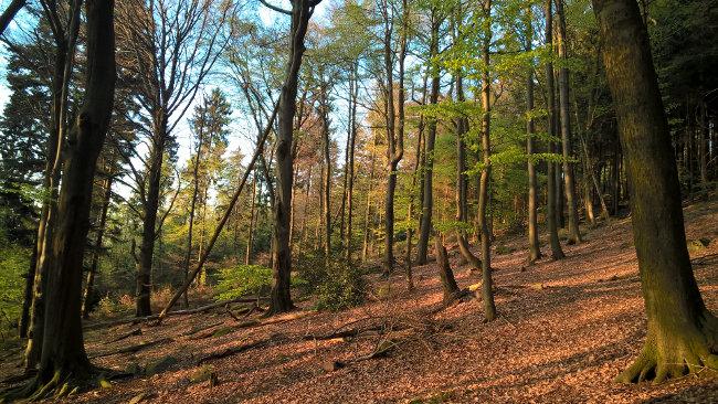 Heidelberg: Abstieg vom Königstuhl